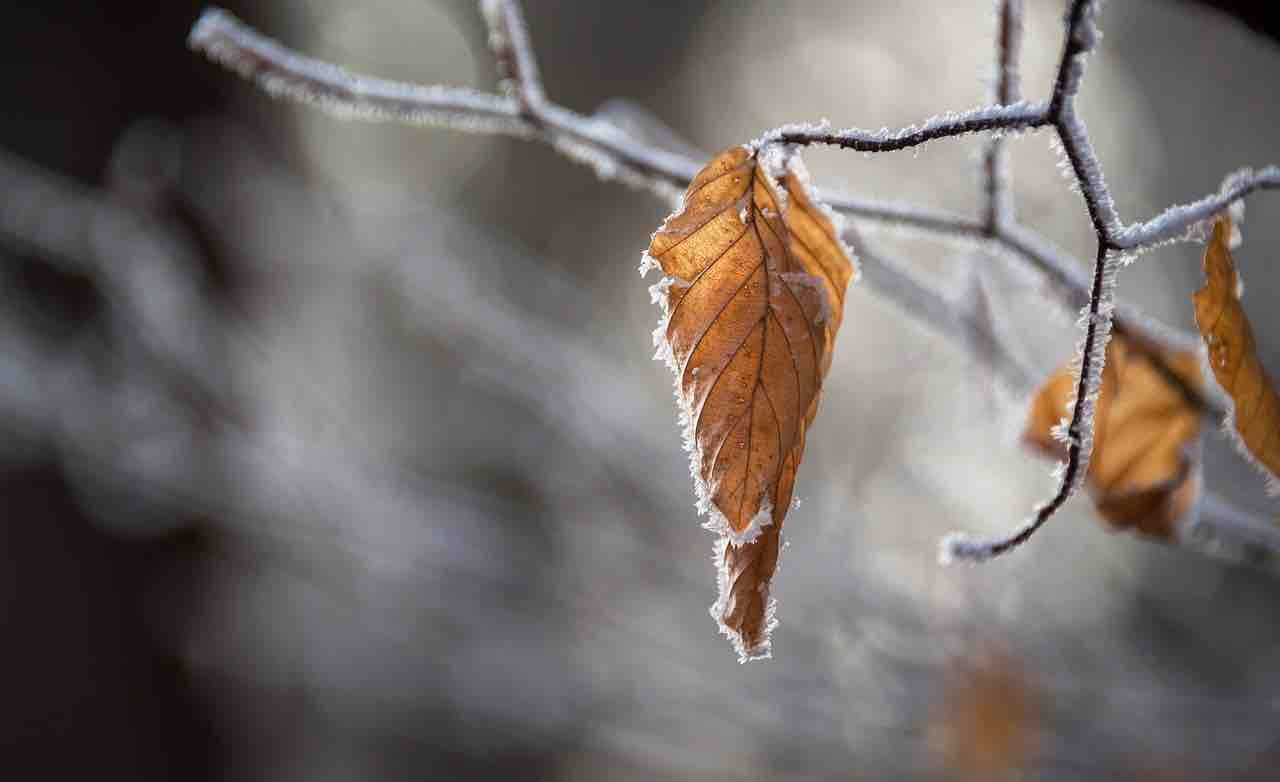 fall leaf with ice