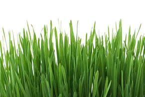 tall green grass