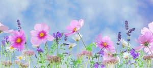 colorful wildflowers blooming