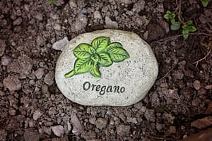 oregano in a stone