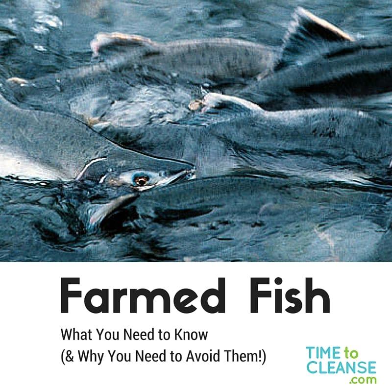Farmed Fish