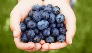 blueberry superfoods