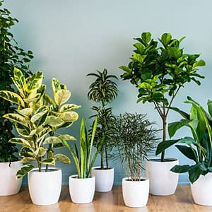 Clean Home: Indoor Plants