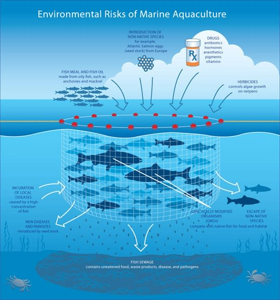 Environmental dangers of aquaculture