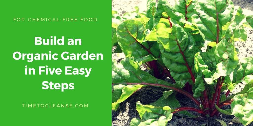 Organic Garden Swiss chard