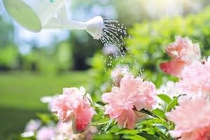 Water can, flowers, water spray